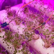 PT_hydroponics2